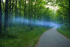Blue smoke spreads over the road in the woods Royalty Free Stock Photography