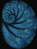 Blue Snail Shell Fossil Spiral Stock Image