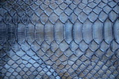 Blue snake skin stock photos