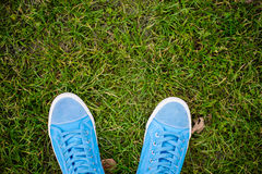 Blue Sneakers. Lying on green grass stock photo