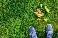 Blue Sneakers on Green Grass Lawn. Blue sneakers on a green grass with fallen leaves top view. A view from the first person under the feet to autumn green grass Stock Photo