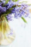 Blue snowdrop Stock Image