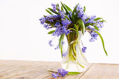 Blue snowdrop in vase Stock Photography