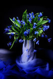 Blue snowdrops Stock Photography