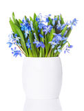 Blue snowdrops, first spring flowers Royalty Free Stock Images