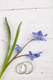 Blue snowdrops and wedding rings. On old white wooden board Stock Photo
