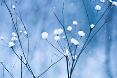 Blue Snowfall Stock Image