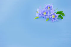 Blue solid background with lilac flowers. stock photos