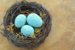 Blue speckled eggs in nest Stock Photos