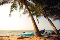 Blue speedboats under palm treas on a sandy beach in Negombo, Sr royalty free stock images
