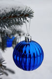 Blue sphere on a blue fur-tree. In forest Stock Images