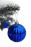 Blue sphere on a blue fur-tree isolated on white Stock Photos