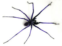 Blue spider. Don´t panic, he only wants to play Stock Photo