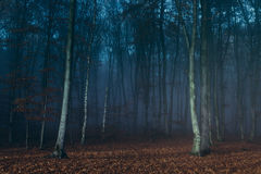 Blue spooky dark fog into the forest. Gloomy dark autumn day. Filtered image Stock Photo