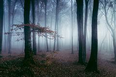 Blue spooky light into foggy forest Stock Images
