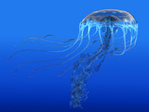 Blue Spotted Jellyfish Stock Image