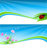 Blue spring banner. Vector blue spring banner with flowers and ladybird royalty free illustration
