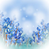 Blue spring crocuses Royalty Free Stock Image