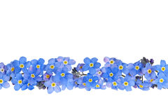 Blue spring flower border Royalty Free Stock Photos