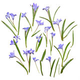 Blue spring flowers background Royalty Free Stock Photo