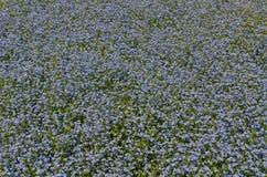 Blue Spring Flowers Stock Photo