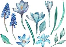 Blue spring flowers clip-art. Separate watercolor elements of flowers and leaves isolated on white background vector illustration