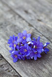 Blue Spring Flowers On Wooden Table Royalty Free Stock Photos