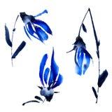 Blue spring flowers Royalty Free Stock Photos