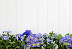 Blue spring flowers on wooden white background for decoration. Royalty Free Stock Photos