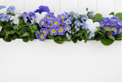 Blue spring flowers on wooden white background for decoration. stock photography