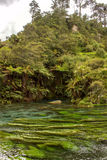 Blue spring. A natural spring near Hamilton, spring water was blue looks like a jade belt across valley Stock Photo