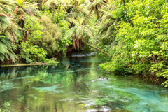 Blue spring. A natural spring near Hamilton, spring water was blue looks like a jade belt across valley Royalty Free Stock Photography