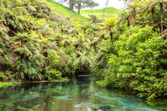 Blue spring. A natural spring near Hamilton, spring water was blue looks like a jade belt across valley Royalty Free Stock Images
