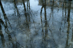 Blue spring puddle: trees reflect on the water surface and gray house in the right upper corner, rain drops create circles on the Stock Images