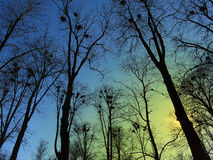 Blue spring sky among bare branches of the trees. Philosophical image of height and awakening of earth, yellow beams of evening sun warming up the picture Stock Photos