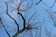 Blue spring sky. The boundless sky. Trees against the blue sky. Trees without foliage. Spring mood Royalty Free Stock Photos