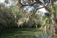 Blue Spring State Park, Florida, USA Royalty Free Stock Photography