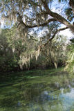 Blue Spring State Park, Florida, USA Royalty Free Stock Image