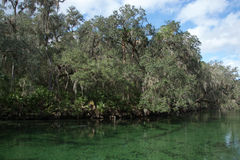 Blue Spring State Park, Florida, USA Stock Photography