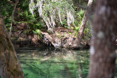 Blue Spring State Park, Florida, USA Stock Images