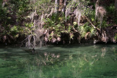 Blue Spring State Park, Florida, USA Stock Photo
