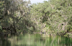 Blue Spring State Park, Florida, USA Royalty Free Stock Images
