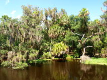 Blue Spring State Park. Blue Spring, near Orange City, Florida, is the largest spring on the St. Johns River. It is a winter refuge for manatees and is also a stock photos