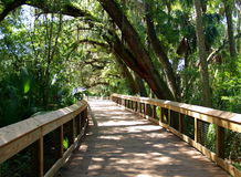 Blue Spring State Park. Blue Spring, near Orange City, Florida, is the largest spring on the St. Johns River. It is a winter refuge for manatees and is also a royalty free stock photos