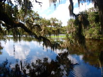 Blue Spring State Park. Blue Spring, near Orange City, Florida, is the largest spring on the St. Johns River. It is a winter refuge for manatees and is also a royalty free stock image