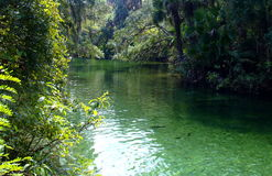 Blue Spring State Park. Blue Spring, near Orange City, Florida, is the largest spring on the St. Johns River. It is a winter refuge for manatees and is also a stock photography