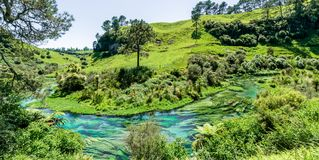 Blue Spring which is located at Te Waihou Walkway,Hamilton New Zealand. It internationally acclaimed supplies around 70% of New Zealand`s bottled water because stock image