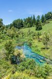 Blue Spring which is located at Te Waihou Walkway,Hamilton New Zealand. royalty free stock image