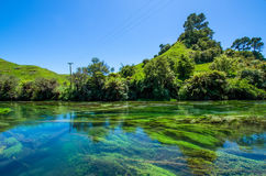 Blue Spring which is located at Te Waihou Walkway,Hamilton New Zealand. royalty free stock photos