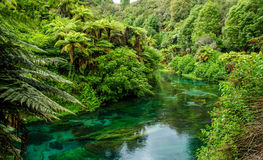 Blue Spring which is located at Te Waihou Walkway,Hamilton New Zealand. It internationally acclaimed supplies around 70% of New Zealand's bottled water because Royalty Free Stock Photo